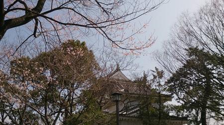 ちょい咲き桜越しの小倉城